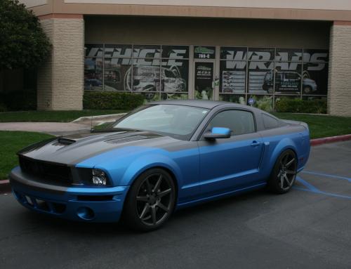 Blue & Black Mustang